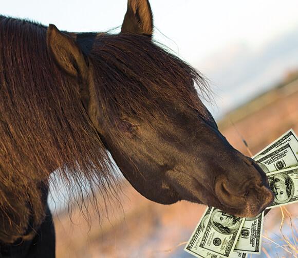 Moneyhorse